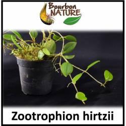 Zootropion hirtzii