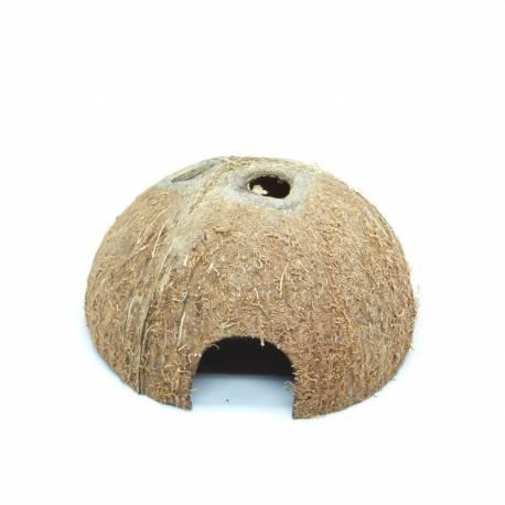 Noix de coco en forme de hutte - Idéale pour un terrarium à Dendrobates