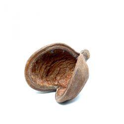 Badam - Coque décorative, élément de décor, support Tillandsia