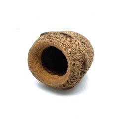 Petite noix de sapucaja - Diamètre 4 à 7cm - Noix de ponte ou décoration