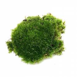 Mousse boule - Mousse de décoration pour terrarium et composition végétale