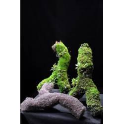 Branche d'EPIWEB - Substrat Spécial Epiphyte