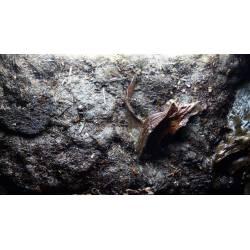 Decopur - Anciennement Elastopur 2.0 - Réalisation décor terrarium, aquarium