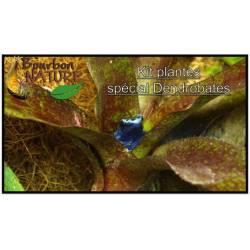 Kit Dendrobates N°2 : Substrat + Décor + Plantes terrarium