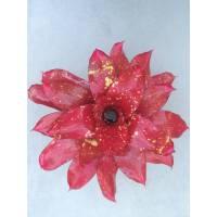 Neoregelia Monet - Plante rosette - Diamètre 30cm
