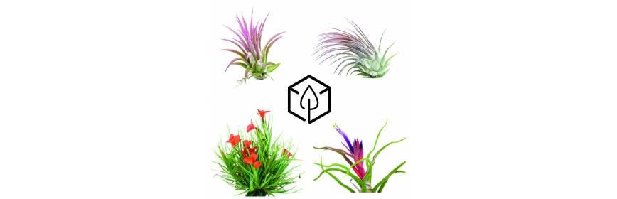 Jardinerie en ligne plante terrarium mur v g tal paludarium composition v g tale bourbon - Kit terrarium plante ...