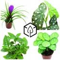 Plantes de décoration d'intérieur