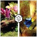 Kit plantes pour terrariophilie