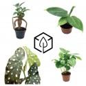 Plantes arbustives